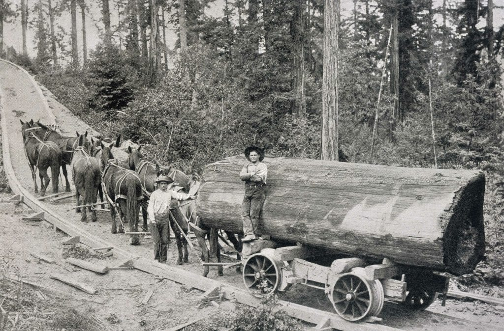 Logging of Old Growth Forest